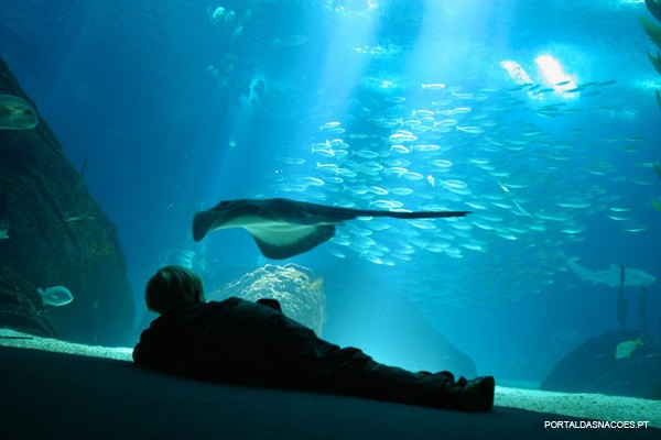 Oceanário  - Exposição permanente